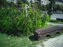 144-Weeping Willow. Minotaur weeping willow tree. Zaporozhye, Ukraine, 24 August 2018 stock images