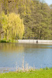 Weeping willow on the other side of the lake Stock Image