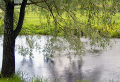 Weeping willow over river. Riparian weeping willow leaned over the water in summer Stock Image