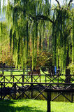 Weeping willow in the park Royalty Free Stock Photos