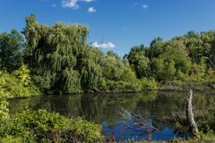 Weeping Willow Pond. The blue sky over a small pond in rural Ohio is reflected in it's still water. The pond is ringed with lush vegetation including a large royalty free stock photo