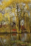 Weeping willow. Reflecting in a water with a seat to relax or enjoy the moment royalty free stock photo