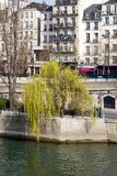 Weeping willow in the spring Paris Royalty Free Stock Image