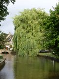 Weeping Willow with the sun on it. Weeping Willow on a warm summer day, taking in all the carbon royalty free stock photo
