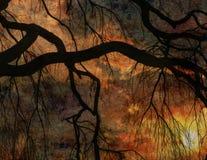 Weeping willow sunset stock photos