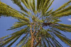 Weeping willow tree. View from bottom up to a weeping willow tree royalty free stock photography