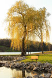 Weeping Willow. A weeping willow tree and bench on the shore of a lake at sunset royalty free stock images