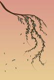 Weeping Willow tree branch background. With sunset Royalty Free Stock Photography