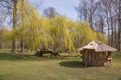 Weeping willow tree in the park Royalty Free Stock Photography