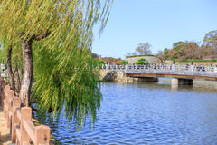 Weeping Willow tree with the river in Japan Stock Photo