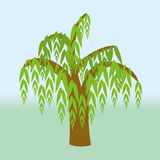 Weeping willow. A weeping willow tree vector illustrationn Stock Photography