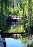 Weeping willow trees and bridge, Kinosaki Japan. The scene of weeping willow trees on riverside and old bridge, Kinosaki city of Japan stock photo
