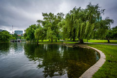 Weeping willow trees and the lake at the Public Garden in Boston stock photo