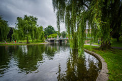 Weeping willow trees and the lake at the Public Garden in Boston stock image