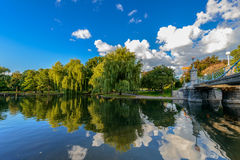 Weeping willow trees. And a pond in the Boston Public Garden royalty free stock photos