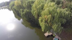 Weeping willow trees reflected on a river. drone video.  stock footage