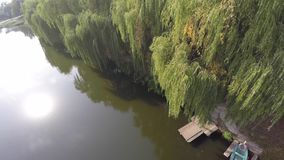 Weeping willow trees reflected on a river. drone. stock image