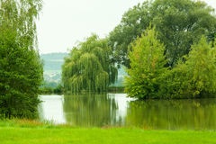 Weeping Willow. Wide of weeping willow lakefront royalty free stock images