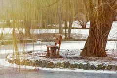 Weeping willow and wooden bench by the frozen lake Stock Photos