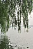 Weeping willows in Beihai Park Stock Photo