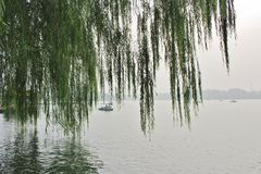 Weeping willows in Beihai Park Stock Photography