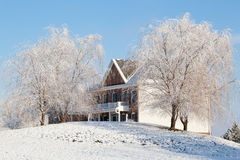 Weeping willows frame modern house royalty free stock photography