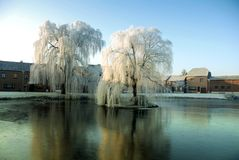 Weeping Willows In The Center Of The Village Stock Photos
