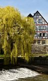 Weeping Willows Stock Images