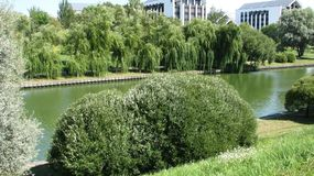Weeping willows on the shore of the city water channel. Minsk. Belarus stock image