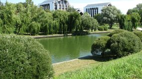 Weeping willows on the shore of the city water channel. Minsk. Belarus royalty free stock photography