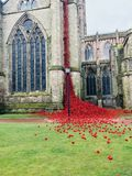 Weeping Window. `Weeping window` sea of red poppies at Hereford Cathedral, Hereford, Herefordshire, England, UK stock images