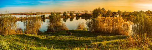 Weepings willows at autumn sunrise Stock Image