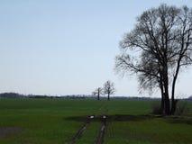 Weer oplevende bomen Stock Afbeelding