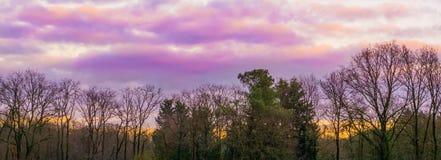 Weer phenomenons, roze en purpere polaire stratosferische wolken in de hemel, boslandschapsachtergrond royalty-vrije stock afbeeldingen