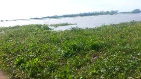 Weergeven aan een rivier met acuaticsinstallaties stock afbeelding