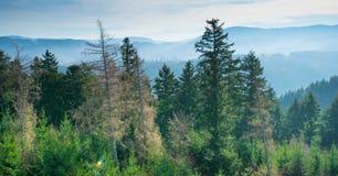 Weergeven aan het zwarte bos dichtbij Oberkirch stock foto's