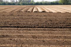 Weergeven op geploegd bewerkt cropland met symmetrische verticale en horizontale voren in Nederland dichtbij Roermond royalty-vrije stock foto