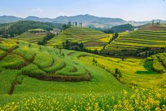 Weergeven op vallei van gele canola terrasvormige gebieden die in Yunnan, China bloeien royalty-vrije stock foto's