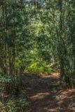 Weergeven van archaïsch weg in het midden van het bos van eucalyptus en remvareninstallatie stock afbeeldingen