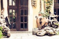 Weergeven van binnenplaats van het huis van de oude bouw in Catanië, Sicilië, Italië, traditionele architectuur royalty-vrije stock foto
