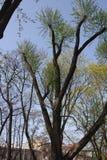 Weergeven van bomen in het Park royalty-vrije stock afbeeldingen