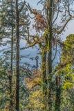 Weergeven van Buçaco-paleistoren in het midden van bomen royalty-vrije stock foto's