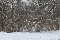 Weergeven van de bossen en de vlaktes van Scioto-Bosjes stock foto
