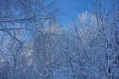 Weergeven van de bovenkanten van bomen stock foto's