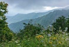Weergeven van de groene bergen van het bos royalty-vrije stock afbeelding