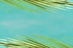 Weergeven van de takken van palmen tegen de blauwe hemel royalty-vrije stock afbeelding