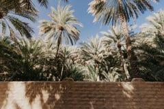 Weergeven van de Unesco aangeworven oase in Al Ain, de V.A.E stock afbeelding