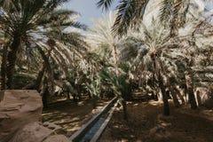 Weergeven van de Unesco aangeworven oase in Al Ain, de V.A.E stock afbeeldingen