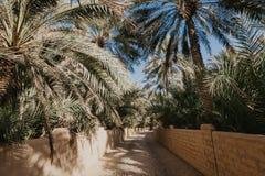 Weergeven van de Unesco aangeworven oase in Al Ain, de V.A.E royalty-vrije stock foto's