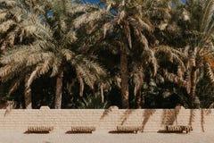 Weergeven van de Unesco aangeworven oase in Al Ain, de V.A.E stock foto's